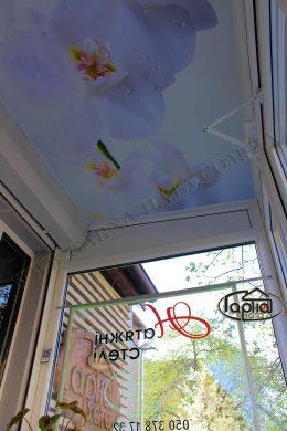 натяжные потолки фотопечать цветы
