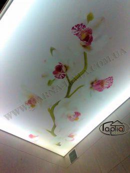 натяжные потолки цветы фото