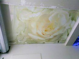 натяжні стелі квіти