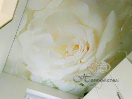 матовые натяжные потолки с фотопечатью цветок
