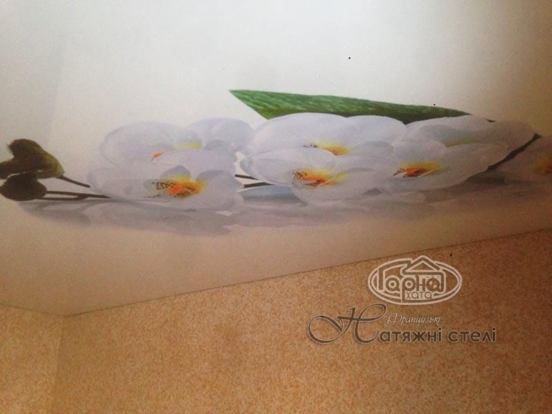 Натяжна стеля з фотодруком квіти